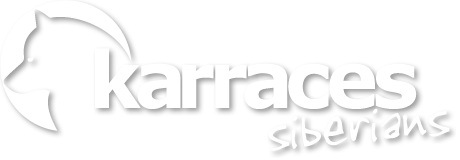 Karraces Siberians - Logo